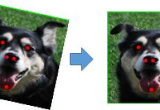 黑科技  狗脸识别正式上线,快带上你家狗子来体验!
